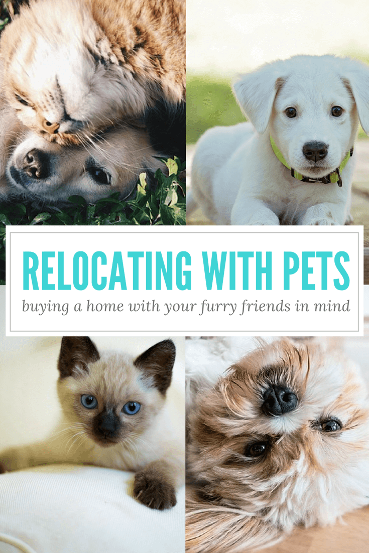 Relocating with Pets: Buying a Home with Your Furry Friends in Mind
